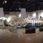 【ウォーキング】就労移行支援の運動プログラム。日大の骨博物館に行ってきました。